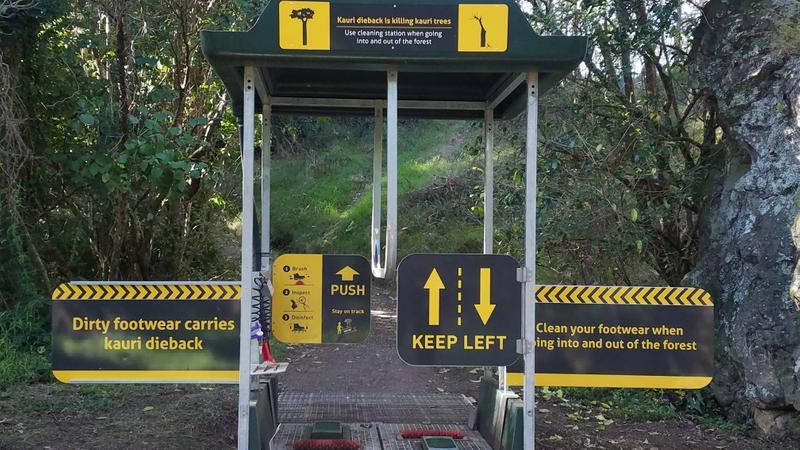 Kiwi effort to protect the native Kauri trees