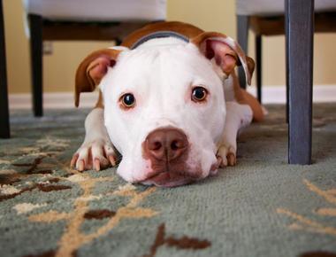 Dog Pregnancy Calculator: When Will Your Dog Whelp?
