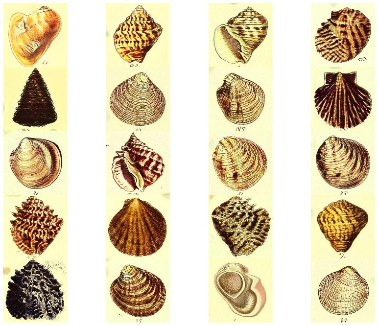 shells_1.png