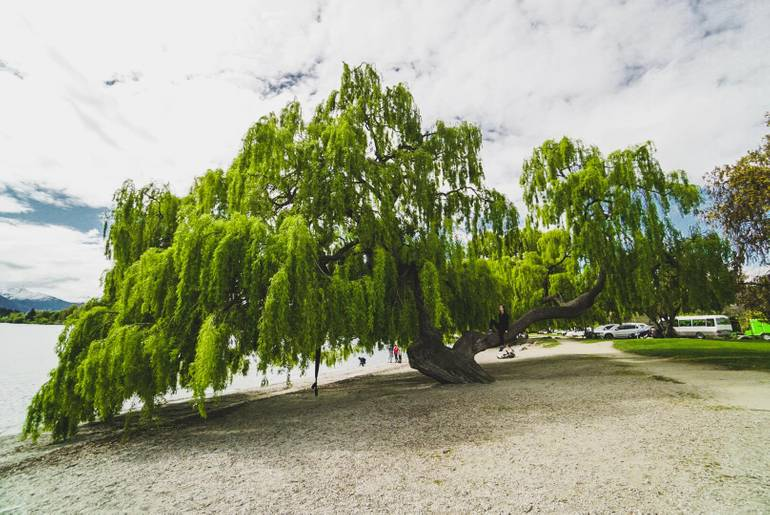 5 Reasons Why You'll Fall In Love With Wanaka