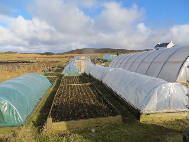 Polytunnels and raised beds