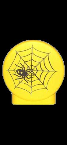 Spider On Web photo