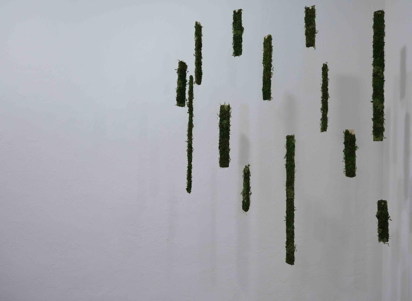Way Plants Move (2019)