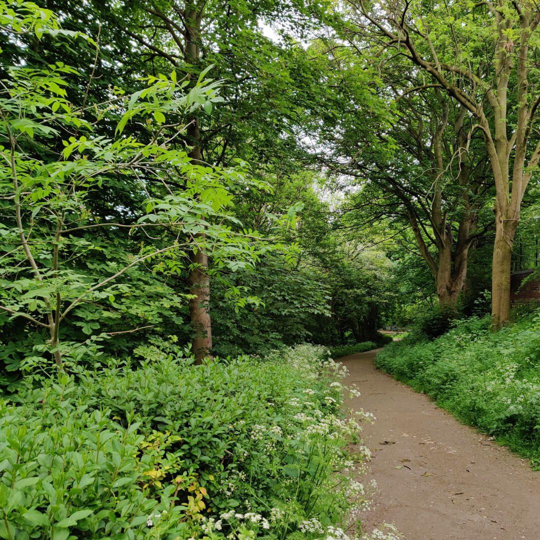 Woodhouse Ridge path between trees