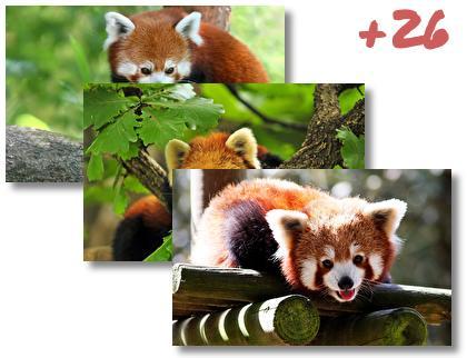 Red Panda theme pack