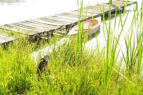 Cat sitting in the long grass near to the dam.