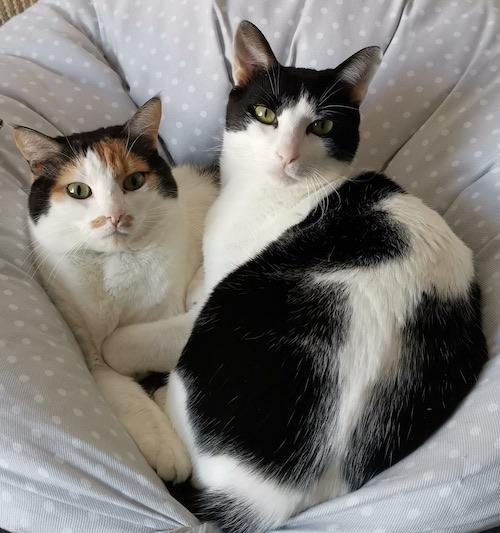 Rosi & Miguelito