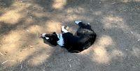Nina acostada sobre un hoyo en el parque