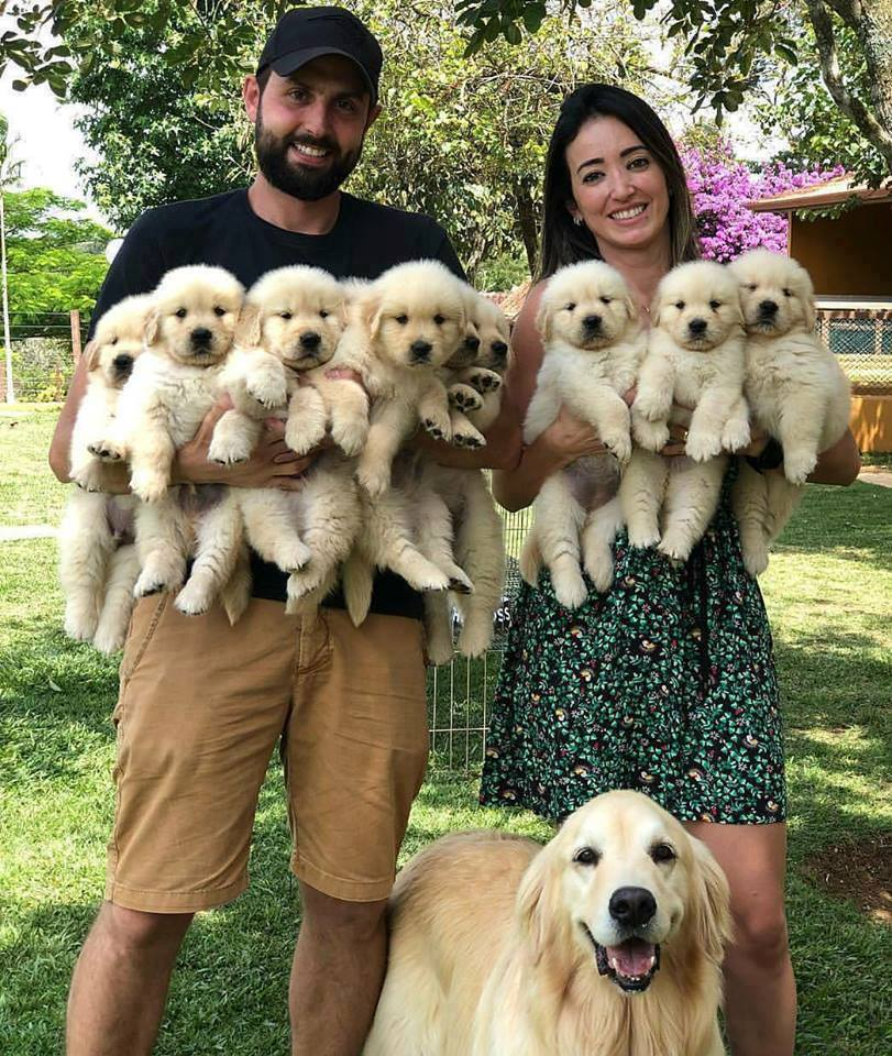 couple standing with labradoodle and holding 8 puppies