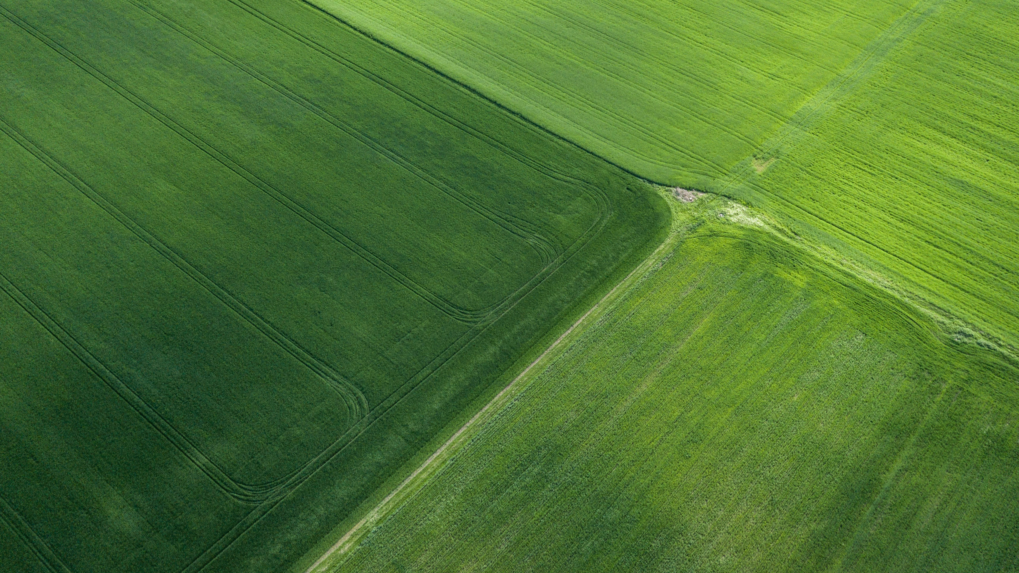 Green field from above