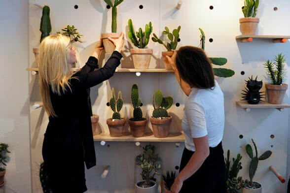 Kaktus CPH