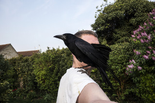 Pet Rook Norfolk