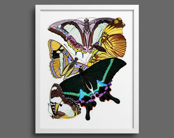 Butterfly print: Papillons by A E Seguy - plate 8