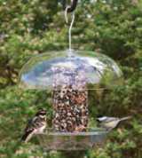 Two birds on a bird feeder in summer