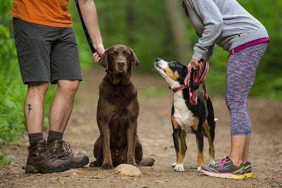 How to Use the Kurgo Quantum Dog Leash