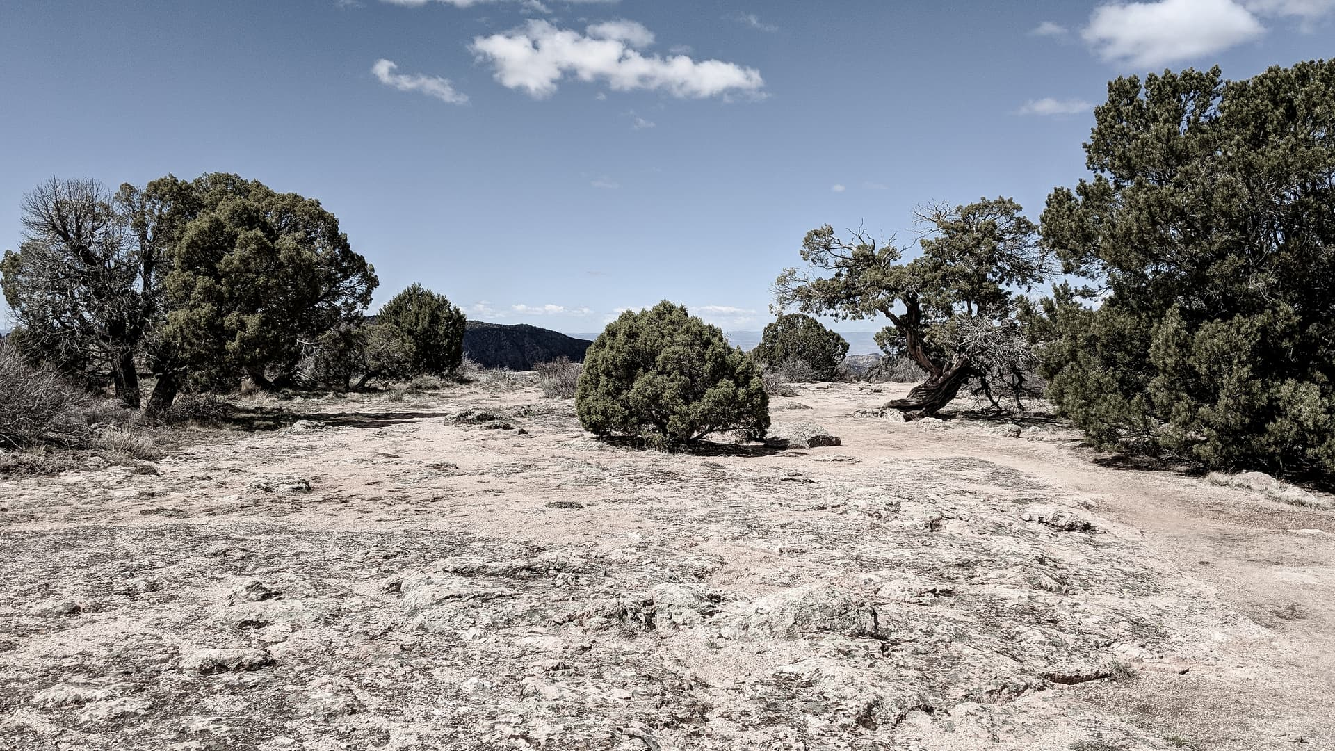 A short, globe-like juniper tree stands alone in the middle of a rocky clearing.
