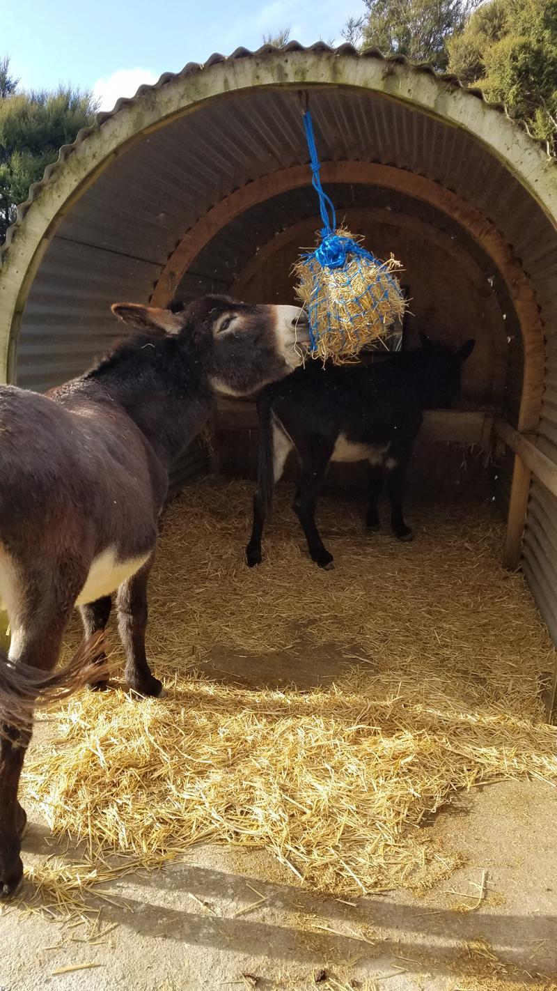 Donkey enrichment activity