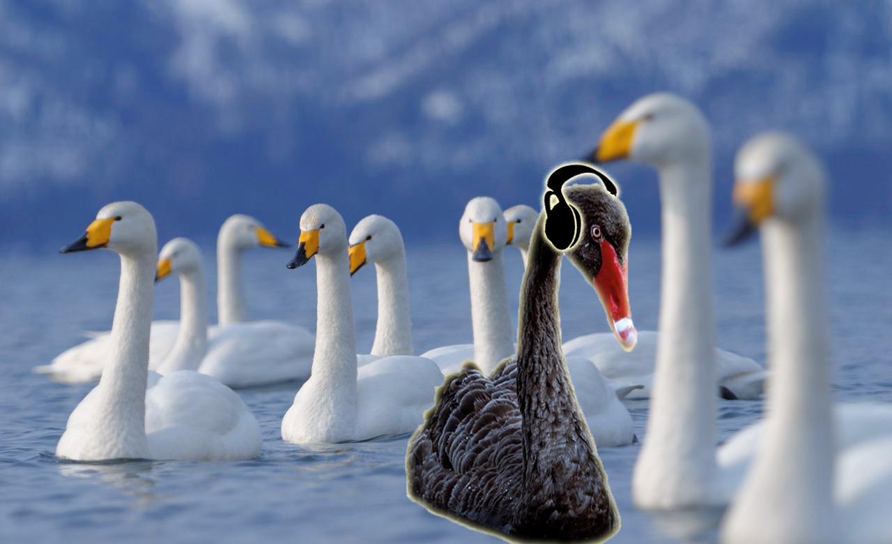 flock_of_swans-wblk.jpg