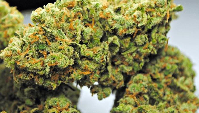 Fatigue-fighting marijuana strain: Jack Herer
