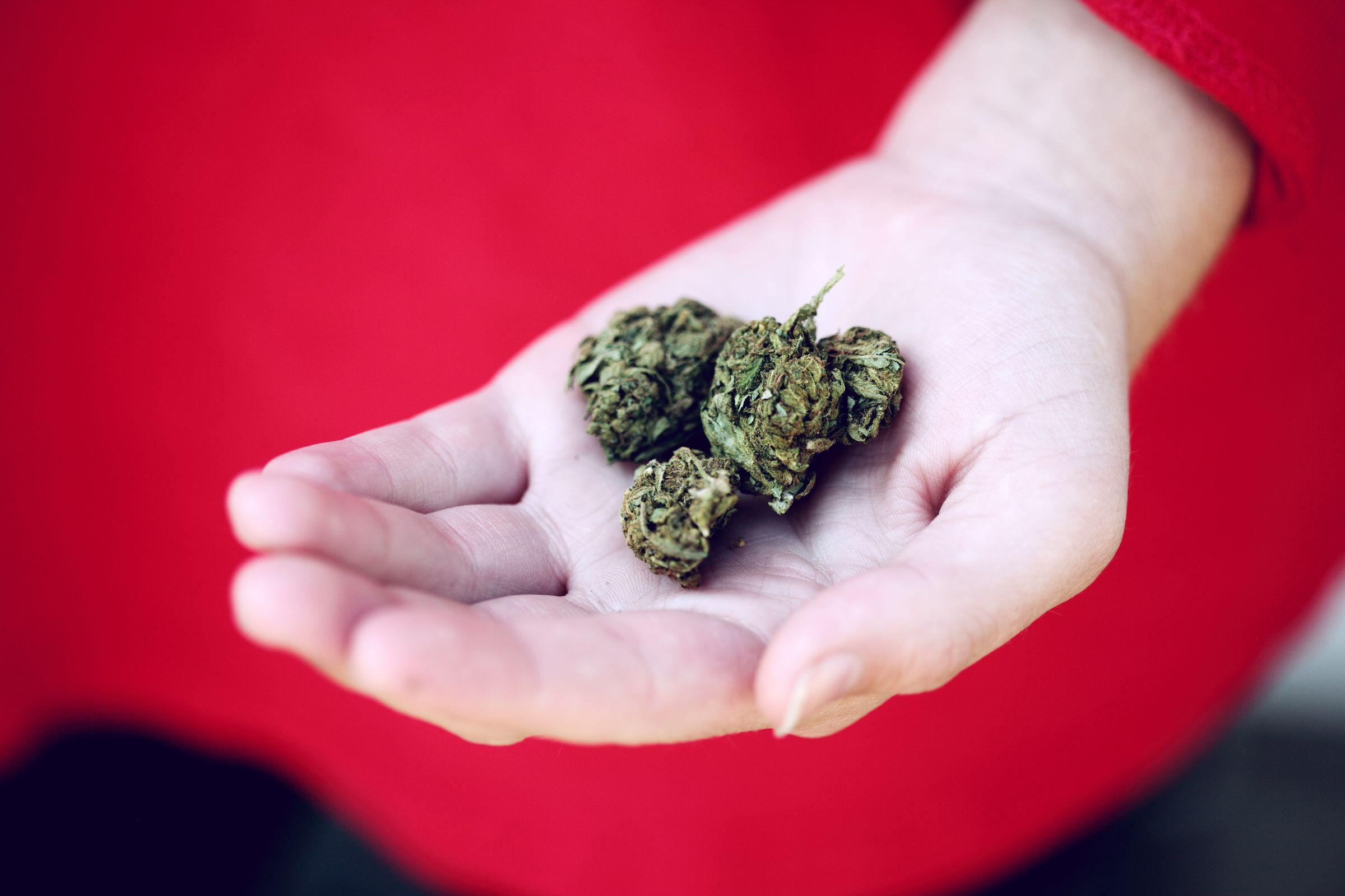 How Many Cannabis Plants For Personal Use: ACT