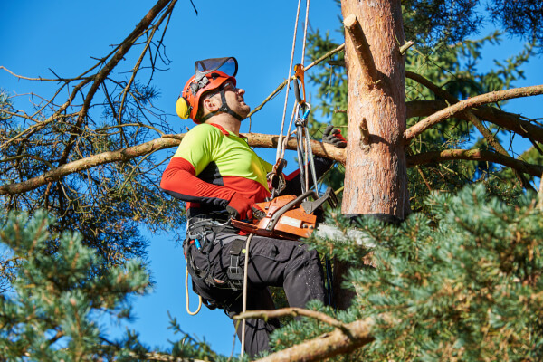 Tree Pruning, Removal, & Trimming