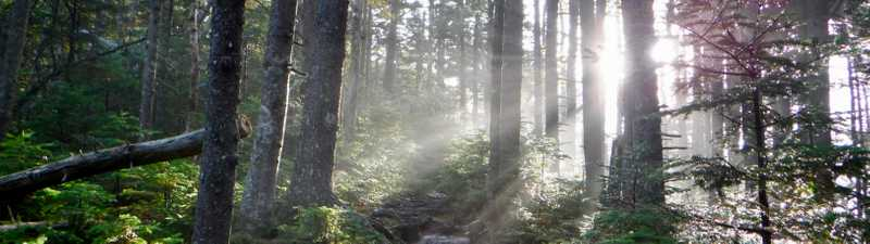Sun filters through trees in Maine on the Appalachian Trail