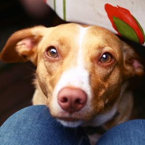 Should Dogs Eat Cranberries