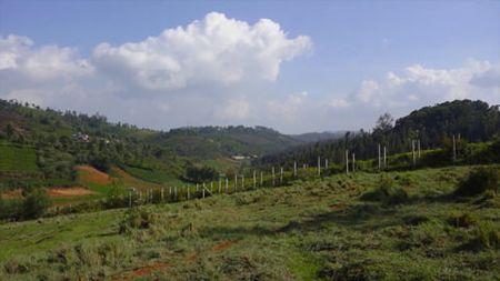 Laidlaw School forest view