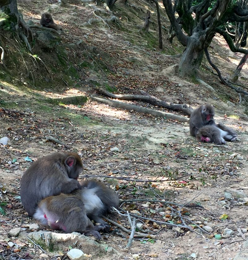 monkeys in Kyoto
