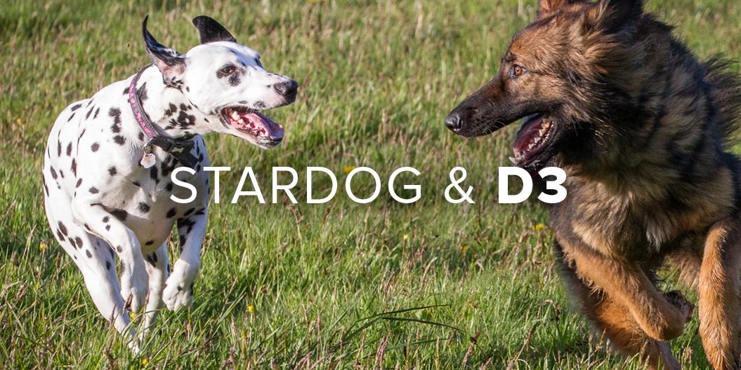 Stardog and D3