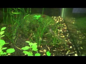 The Technology Introduced on Aquarium Plants Cultivation