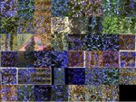 Global Wheat Head Detection 2021: An Improved Dataset for Benchmarking Wheat Head Detection Methods