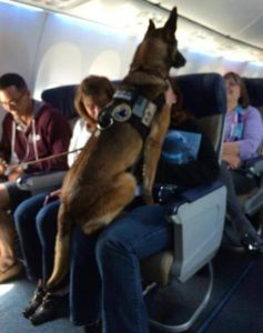 Dog sitting on a peron in a plane