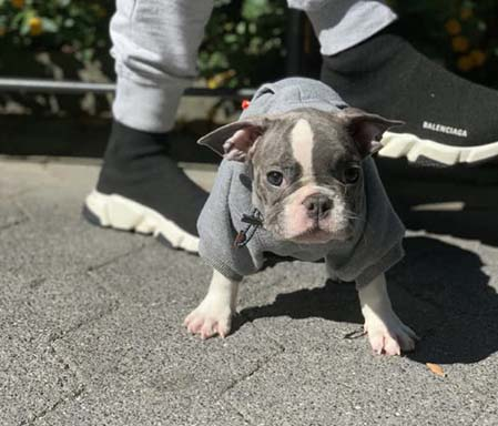 Bruce frenchie hoodie