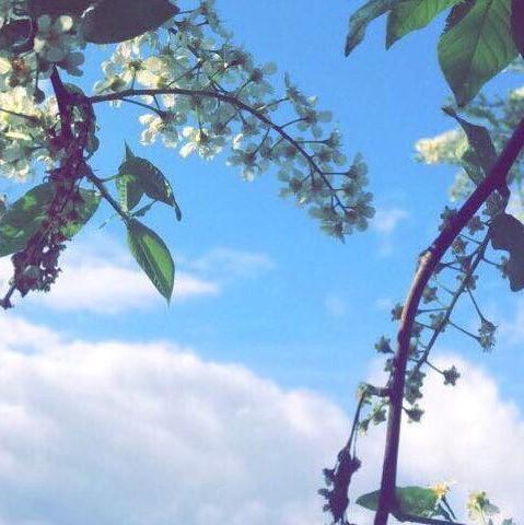 A photo of blossom trees framing a blue sky