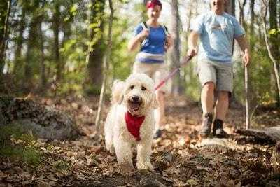 How To Make The Most Of Your Daily Dog Walks