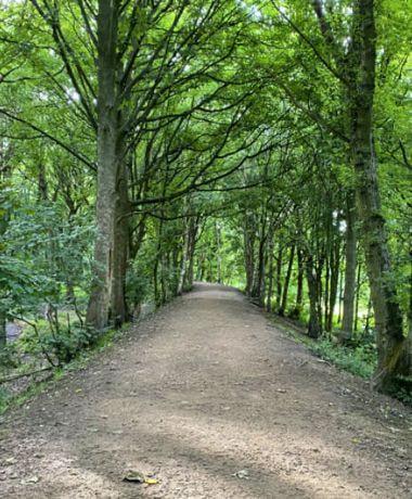 Bramley Fall Woods main footpath through the woods