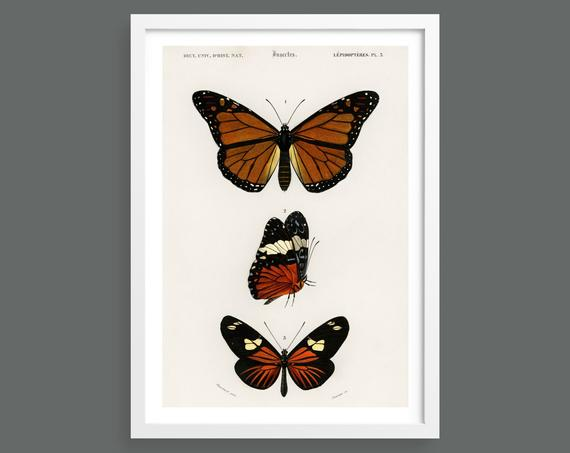 Three butterflies vintage illustration
