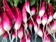 a bundle of radishes