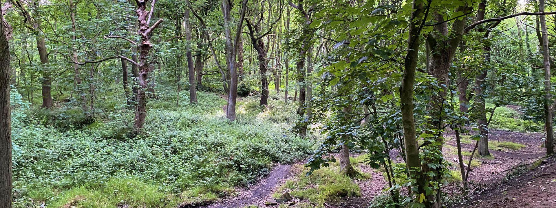 Bramley Fall Woods dense woodland