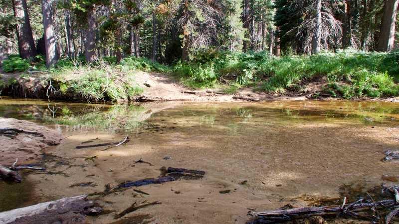 Piute Creek in Yosemite National Park