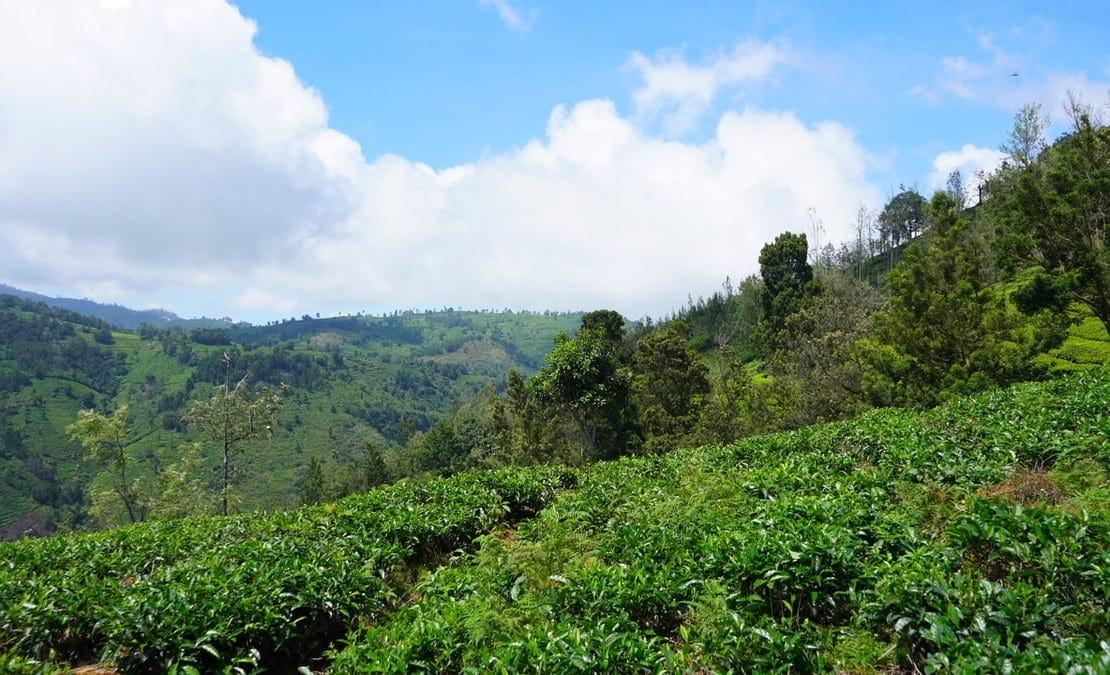 View of the hills going down to Halakarai