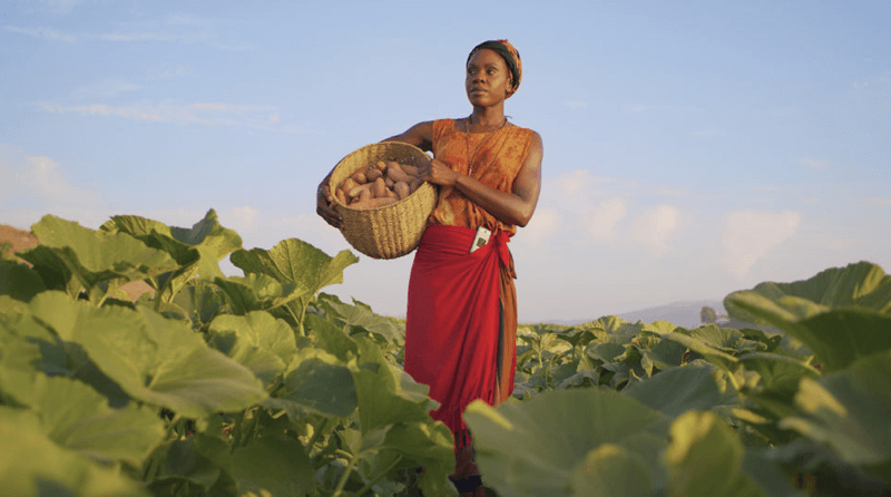 Woman stands in a field holding a basket of harvested goods.