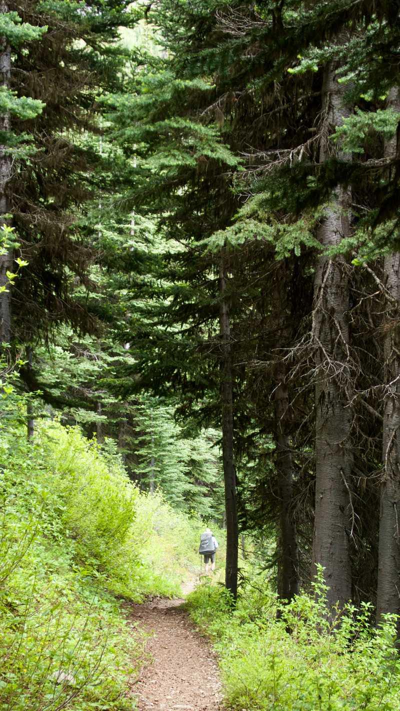 Descending trail into trees