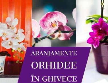 Aranjamente Orhidee in ghiveci
