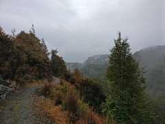 Mt Crichton Loop track
