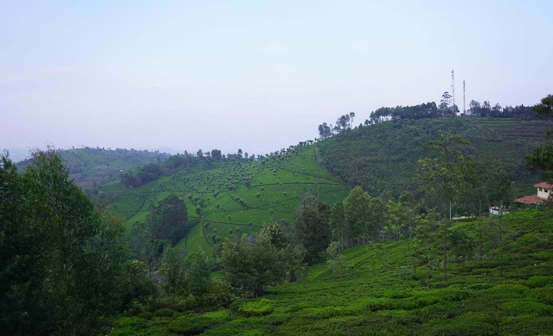Another view of the tea estates surrounding Hillsdale from a plot