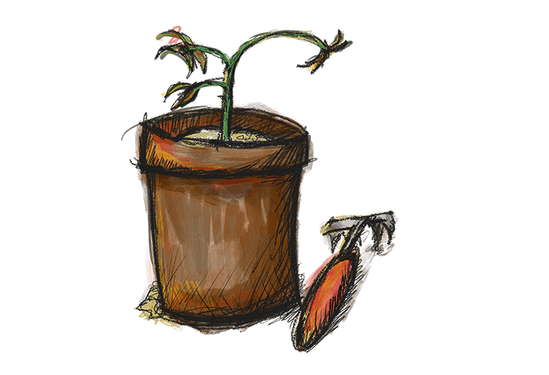 a small wilted plant in a pot