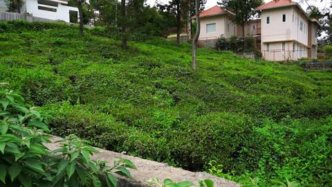 Plot 62 at Serenitea for sale image