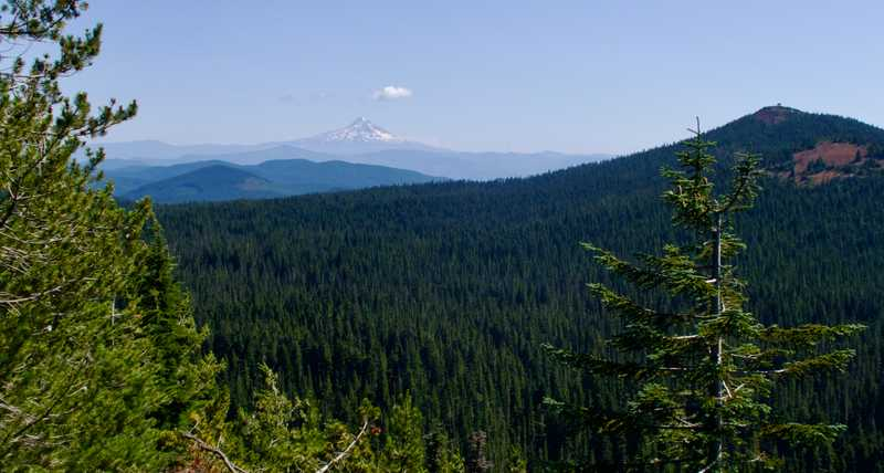 A view of Mt. Hood
